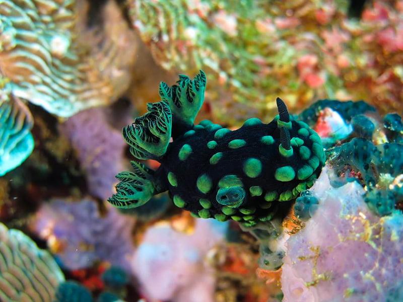 underwater life, Philippines
