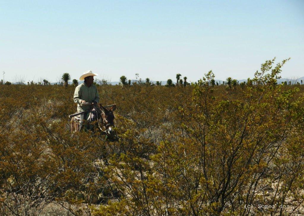 pustynia czlowiek