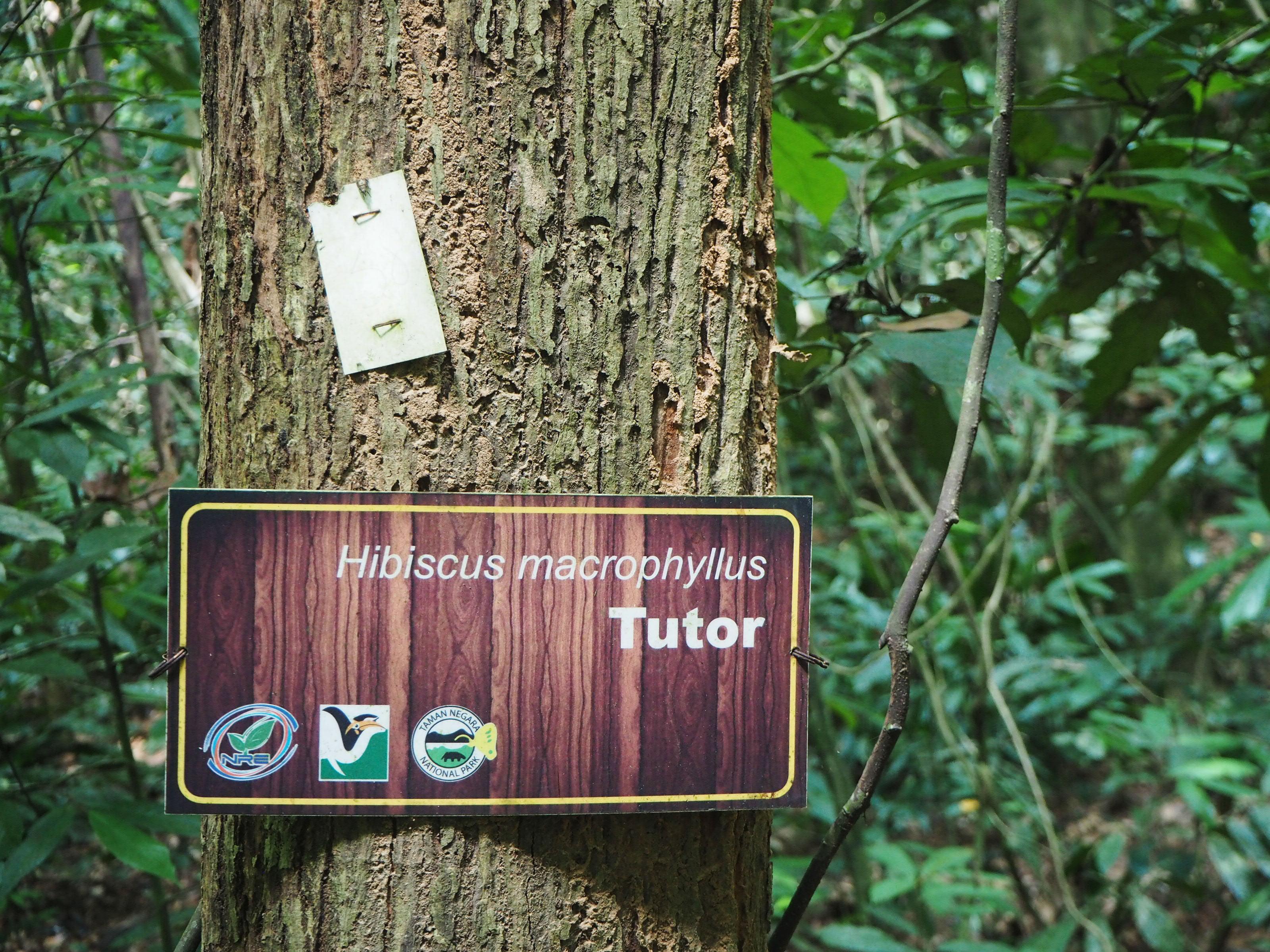 taman negara t, malaysia