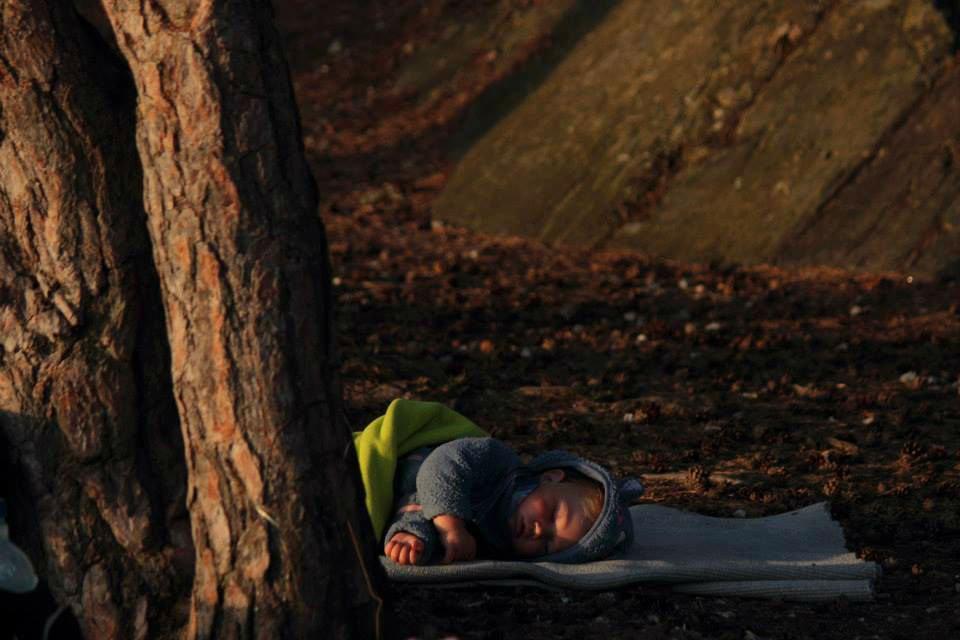 Malina. Spokojny sen wśród szumu drzew.  fot. arch. własne