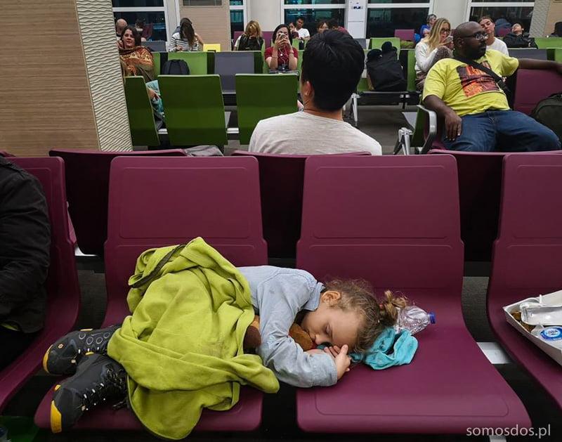 Gaja spi na lotnisku
