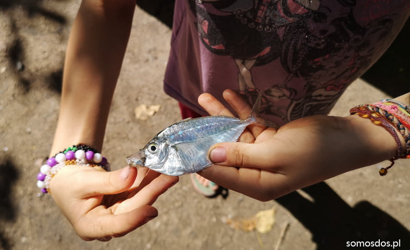 Padre Burgos beach fish
