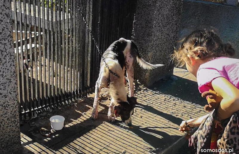 udręczony pies