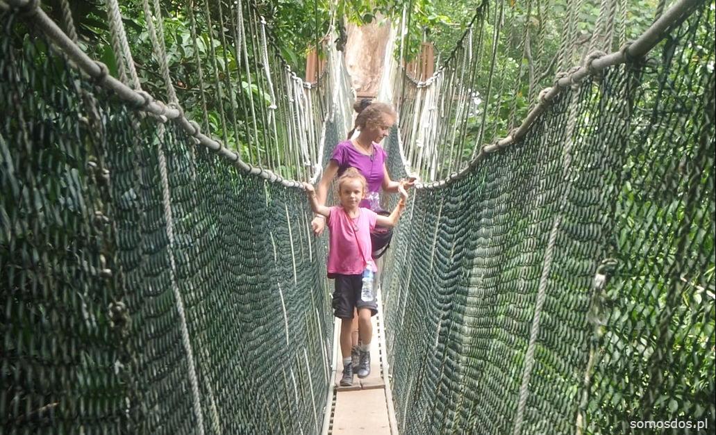 canopy walk taman negara malaysia