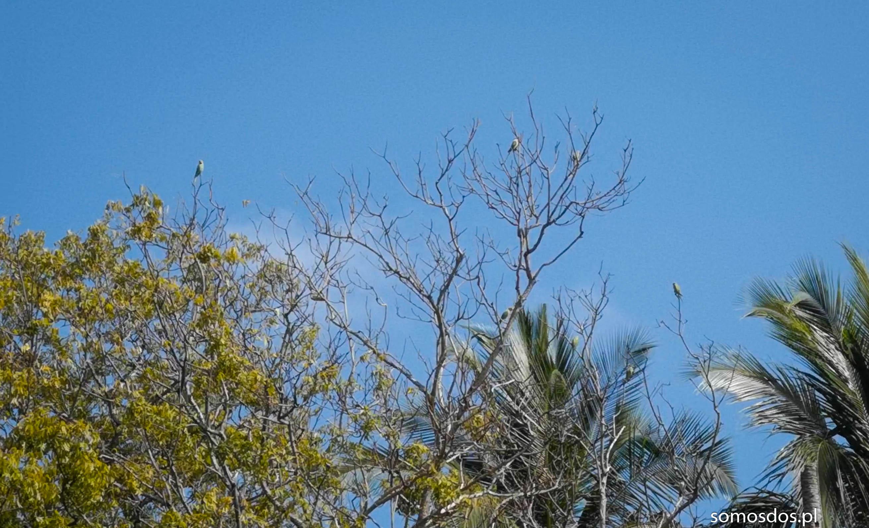 papugi czy żołny
