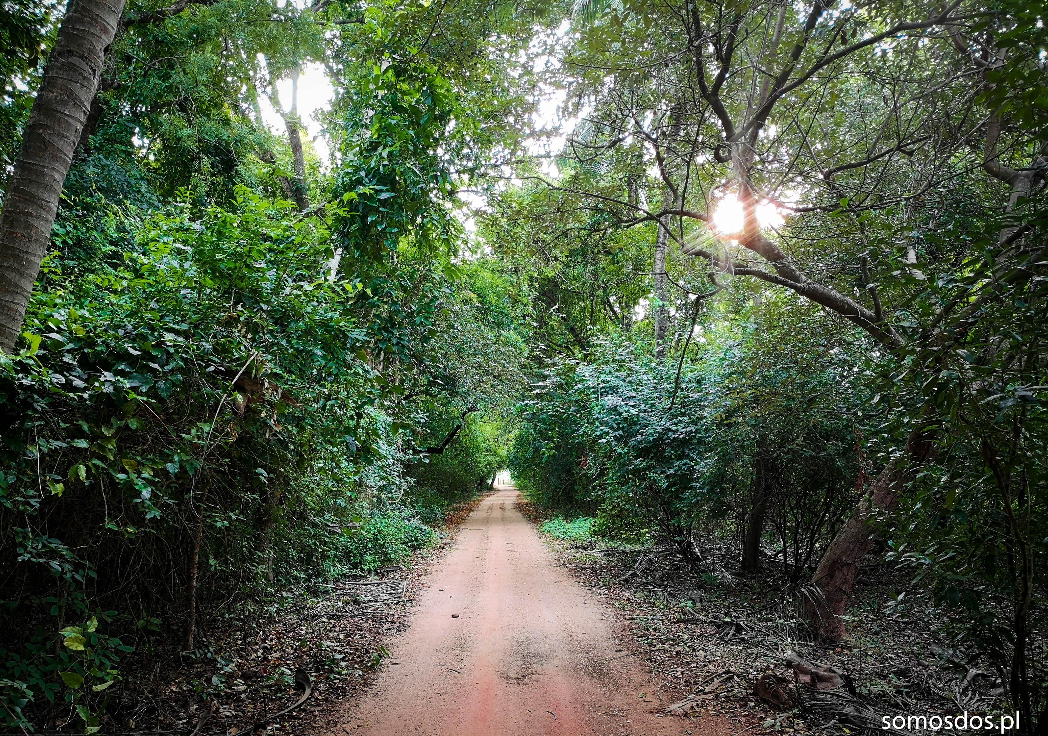 Sri Lanka droga do hostelu Mandy