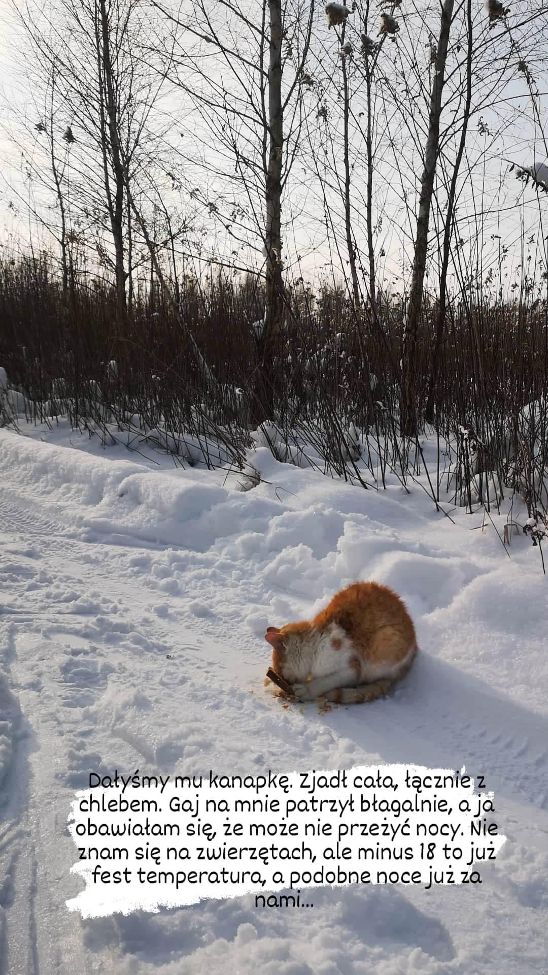 Znalazłam kota